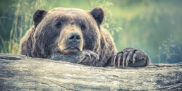 animal-animal-photography-bear-213988