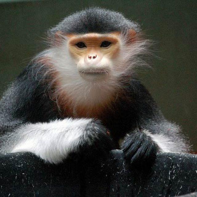 pretty monkey / Jedimentat44