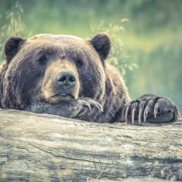 animal-animal-photography-bear-213988